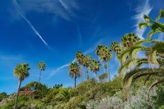 Härligt landskap runt om Laguna Beach fotografering för bildbyråer