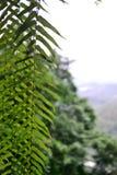 Härligt landskap: sidor och gröna treens på Taipei Taiwan royaltyfri fotografi