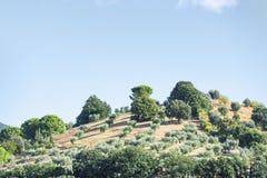 Härligt landskap Tuscany Royaltyfria Foton