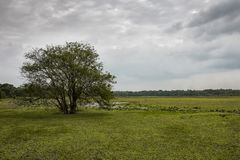 Härligt landskapfoto på den gröna sjön fotografering för bildbyråer