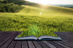 Härligt landskapvetefält i ljus sommarsolljusevenin Royaltyfri Fotografi