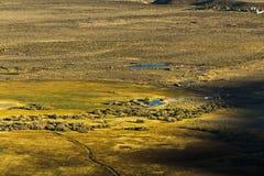 Härligt lantligt gräsfält Royaltyfri Fotografi