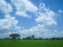 Härligt lantligt landskap Arkivbilder