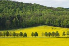Härligt lantligt landskap av att blomma rapsfröt med skogen långt borta royaltyfri foto