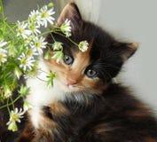 härligt le för kattunge Arkivbild