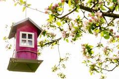 Härligt litet rött fågelförlagematarehus som hänger i ett blommande blomningäppleträd med ljus himmel arkivfoton
