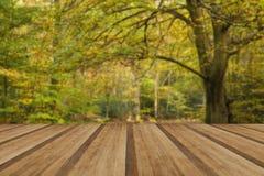 Härligt livligt guld- Autumn Fall skoglandskap med trä arkivfoto