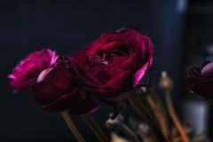 Härligt mörker - röda rosor Arkivbild