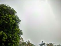 Härligt mangoträd i regnig säsong royaltyfri fotografi