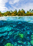 Härligt marin- liv Arkivbilder