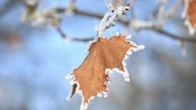 Härligt med orange sidor under snön första snow för fractalbild för bakgrund blå lampa lager videofilmer