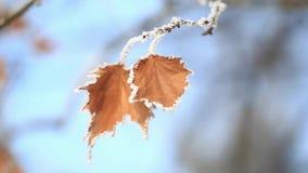 Härligt med orange sidor under snön första snow för fractalbild för bakgrund blå lampa stock video