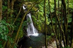 Härligt naturlandskap från Ribeiraen gör Faial da Terra Waterfall Arkivfoton
