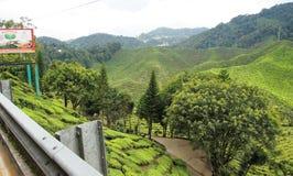 Härligt naturlandskap i Malaysia, Cameron Highland arkivfoto