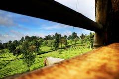 Härligt naturligt landskap, tegräsplan arkivbilder