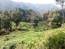 Härligt naturställe Ella Sri Lanka fotografering för bildbyråer