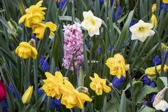 Härligt och färgrikt fält med blommor royaltyfri fotografi