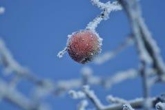 Härligt och frozed med is äpple Arkivbilder