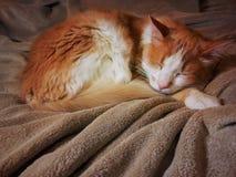 Härligt orange sova för katt Arkivbilder