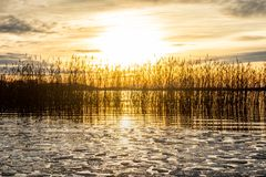 Härligt orange vintersolnedgånglandskap över lugna sjövatten med isisflak, den ljusa solen och vassen mot havshorisont arkivbilder