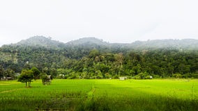 Härligt panorama- landskap med översvämmad risfältfält och moun Royaltyfri Bild