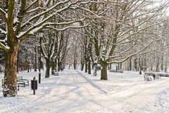 Härligt parkera i vinter Royaltyfri Foto