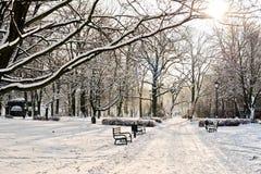 Härligt parkera i vinter Arkivbilder