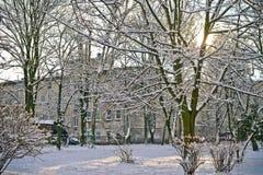 Härligt parkera i vinter Royaltyfria Bilder
