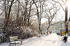 Härligt parkera i vinter Arkivbild
