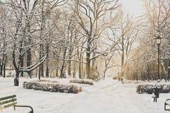 Härligt parkera i vinter Arkivfoton