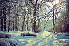 Härligt parkera i vinter Royaltyfria Foton