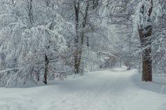 Härligt parkera i vinter efter tungt snöfall royaltyfria bilder