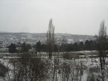 Härligt parkera träd som täckas med snö Arkivbilder