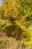 Härligt pittoreskt höstlandskap, en solbelyst höstskog royaltyfri bild