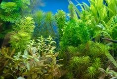 Härligt planterat tropiskt sötvattens- akvarium arkivfoto