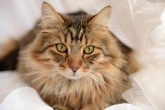 Stående av den härliga katten Royaltyfria Bilder