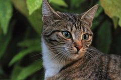 Härligt posera för sida för svart katt Arkivfoton