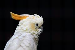 Härligt prov av papegojan Arkivbilder