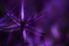 Härligt purpurfärgat blom- abstrakt begrepp för konstnärligt effektfilter Arkivfoto