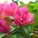 Härligt rött blomma för blomma Arkivfoton