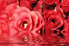 härligt rött reflexionsrovatten Royaltyfri Foto