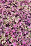 Härligt rosa blad Arkivbild