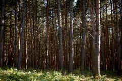 Härligt sörja trä Arkivfoton
