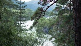 Härligt sörja träd längs bergfloden Royaltyfria Foton