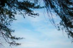 Härligt sörja träd på bakgrund i bangkok på Thailand arkivbild