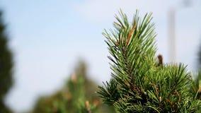 Härligt sörja trädet i skognärbilden lager videofilmer