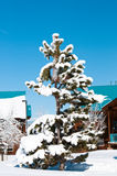 Täckt Snow sörjer treen Royaltyfri Foto