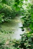 Härligt sagolikt ställe bland träden Damm med mossa arkivfoto