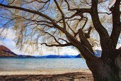 Härligt sceniskt av land för zea för södra ö för sjöwanaka nytt royaltyfri fotografi