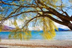 Härligt sceniskt av sjöwanakaen southland Nya Zeeland royaltyfri bild